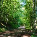 Sous-bois forêt