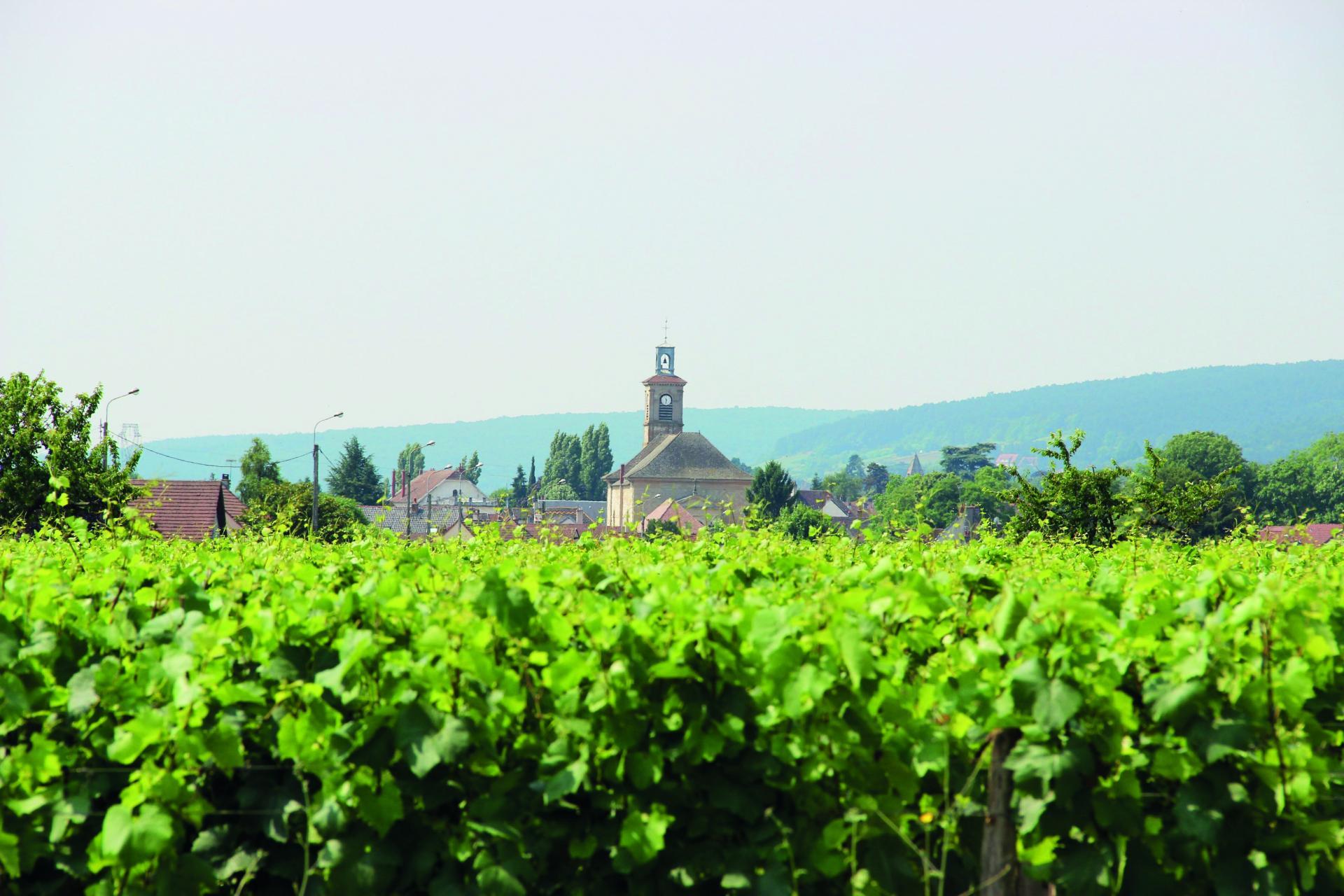 Marsannay-la-Côte - Bourg et vignes